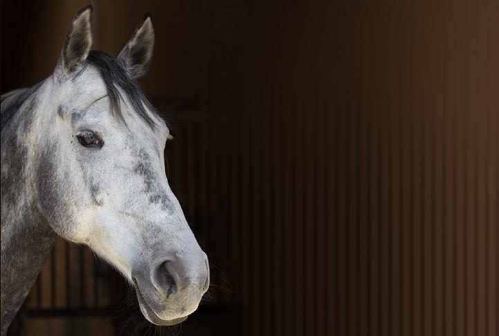 Einer meiner Pferde - Patt